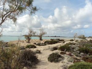 The areas surrounding Elafonisi beach