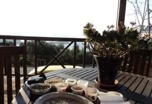Sitting on my balcony in the sunshine, sorting through Jennifer's coquina seashells
