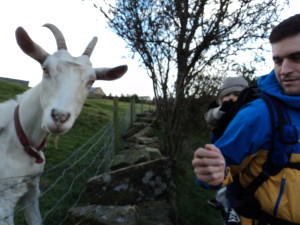 A very photogenic goat!