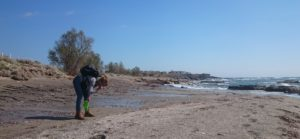 Collecting shells on one of the beaches at Frangkastello
